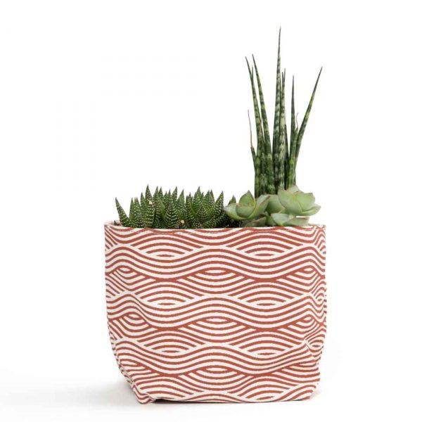 orange wave planter with succulents
